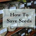 regrowing vegetables, regrow food, seed save, homestead survival, save seed, seeds, seed librari, regrow vegetables, garden