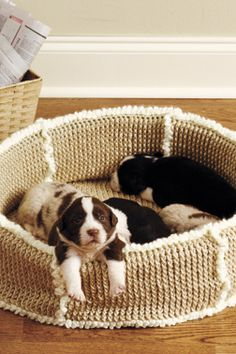 Knitting Patterns For Pet Beds : Crochet & Knitting - For my furry friends on Pinterest Dog Sweaters?