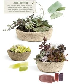 A Word About Color: This summer, we're loving succulents in shades of eggplant, sea foam, and citrus, especially clustered together in a trio of monochromatic dishes. Shop Planters at http://www.shopterrain.com/garden-containers/
