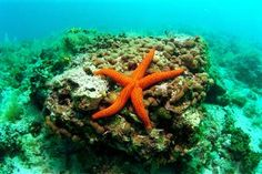 Ocean in Croatia
