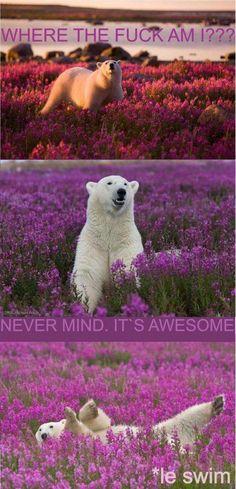 Polar bear don't care!