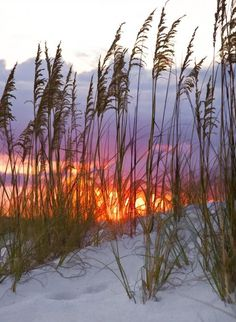 Golden Amber Sunset, Desin Florida, by Janet Fikar