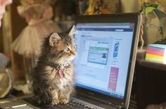 Cat techie