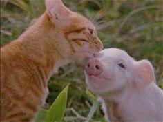kiss, kitten, animal kingdom, funny cats, bacon, baby animals, friend, bath time, piglet