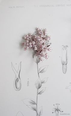 sania pell experimenting with flowers