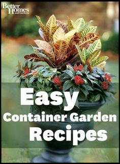 Create attractive container gardens with ease! Here's how:  http://www.bhg.com/gardening/container/plans-ideas/easy-all-foliage-container-gardens/?socsrc=bhgpin052412