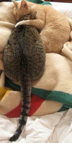 Cat Cuddles ♥