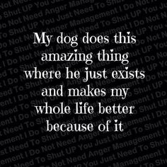 sayings about dogs, quotes about dogs life, my dog does this amazing thing