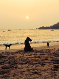 Toffy the dog on Patnem Beach, Goa, India