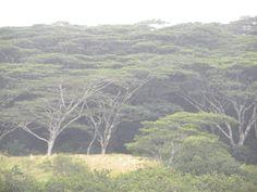 Rainforest in Kona, Hawaii