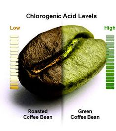 """Pure Green Coffee Beans: Dr. Oz calls it """"A Miracle Fat Burner."""""""
