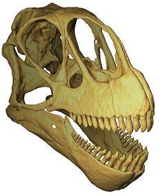 Computer model of a Camarasaurus dinosaur skull.
