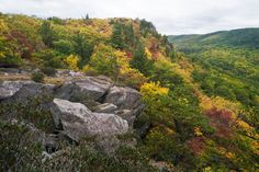 October 14, 2013 - Little Lost Cove Cliffs. It's a cloudy morning in the N.C. High Country with some drizzle.  The color is absolutely beautiful right now at Little Lost Cove Cliffs (accessed from Old Jonas Ridge Road).  (Photo by Skip Sickler)