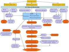 Patho concept map for Diabetes Mellitus
