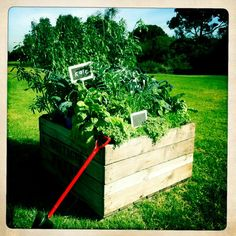Photo shoot for front cover of our book by Little Veggie Patch Co, via Flickr