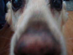 Extreme close up of Kiera-bean
