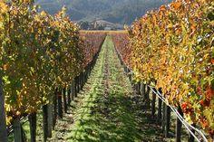 wines, the vineyard, wine tasting, wine country, wine tour, napa valley, napavalley, place, wineri