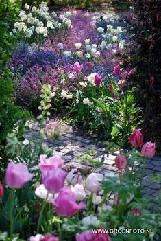 Garden Of Spring Tulips...