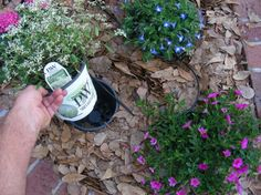 plant annuals in another pot (same size) buried in the ground - easily switch annuals for each season, no need to enrich entire flower bed if very poor soil, pull plants to spray weedkiller then replace, easily lay landscaping fabric, save water when watering, easily experiment with color/placement, rotate plants for even sun exposure