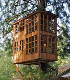 Animal Planet to Premiere TREEHOUSE MASTERS, 5/31