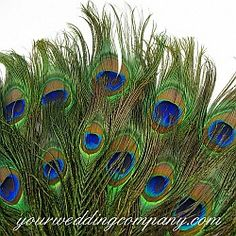 Peacock Feathers $4.25 pack of 6