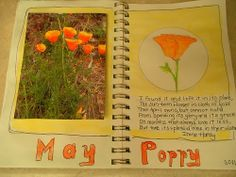 Nature Journal tips and ideas