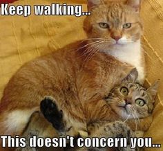funny animals, own business, silly animals, funny cats, funni, funny quotes, keep walking, kitty, cat memes