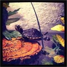 Turtle yoga. :)