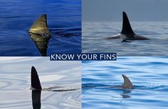 Do You Know Your Fins?