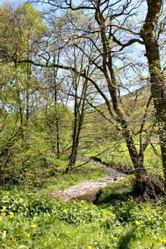 Welsh countryside in Spring