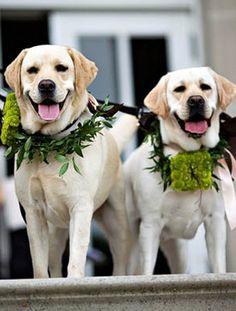 Wedding Dogs :-)