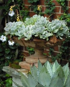 10 Outstanding Succulents | Fine Gardening Succulents need well draining soil and may need to have sand and gravel added to cactus soil mixes.
