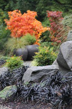 Boulders & black mondo grass