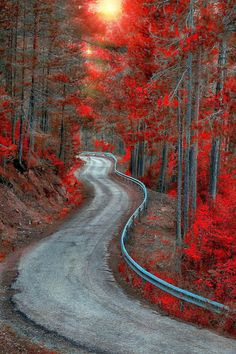 Bosque Country, Spain