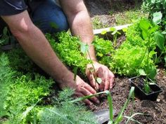 Survival Gardening - this guy has lots of tips for growing food
