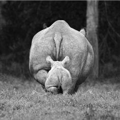 mama rhino/baby rhino <3