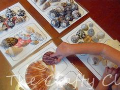 Preschool Printables: Seashells from The Crafty Classroom