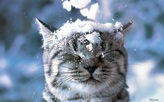 #whistler  #snow animals  #mountain critters  #funny animals