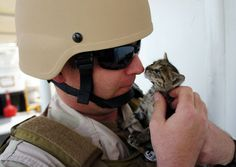 Navy Sailors Bonded with 3 Stowaway Kittens