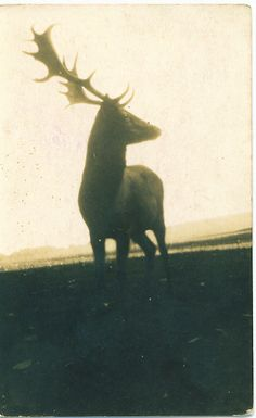 Stag|Antlers