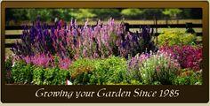 Garden Seeds-Flower Seeds, Vegetable Seeds, Herb Seeds, Organic Seeds | Lake Valley Seed