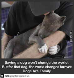 Dogs are family.