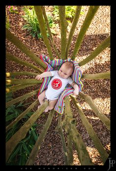 Creative baby picture in a tree.