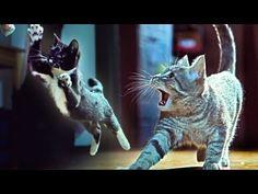 Corridor Digital-Kittens on the beat