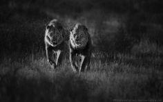 kalahari boys by Stephan Tuengler on 500px