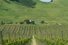Schug Carneros Estate Winery, Sonoma Valley