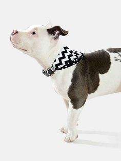 Wildebeest xx bandana dog collar