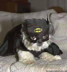 Na na na na na na na na na na Bat Dog!