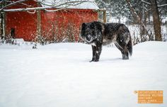 Yamnuska Wolfdog Sanctuary