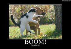 Take that dog!